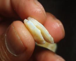 Coober Pedy Gamble Rough stone 11.9  carats