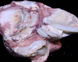 168cts- opalised Shell patch- Natural -Cretaceousperiod  Fo- 1950   -fossi