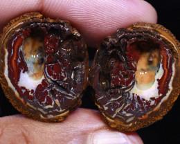 61 CTS YOWAH OPAL SLICED NUT CRO-1183   CROWNOPAL