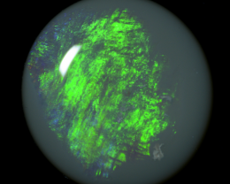1.41 cts ~ SOLID DARK OPAL (N6) ~ LIGHTNING RIDGE ~ #Z597