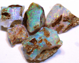 Collectors Opalized Fossil Parcel  DO-2972 - downunderopals