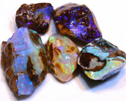 Collectors Opalized Fossil Parcel  DO-2973 - downunderopals