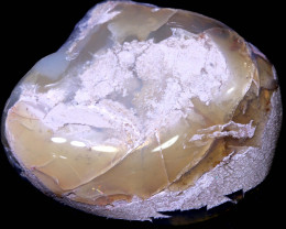 118.80 CTS  CLAM SHELL OPALISED FOSSIL  FO-1966   fossilopals