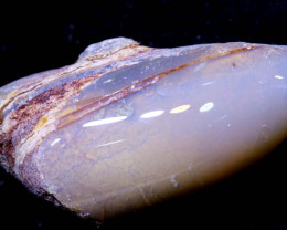 154.20 CTS  CLAM SHELL OPALISED FOSSIL  FO-2005  fossilopals