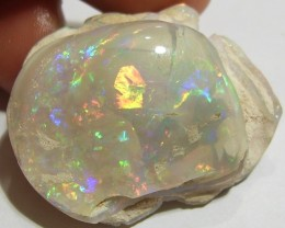 73.00ct STUNNING COOBER PEDY OPALISED GEM SHELL BRIGHT FIRE G35