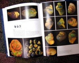 BLACK OPAL FOSSILS OF L.RIDGE-BOOK ON FOSSILS