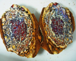 YOWAH NUT SPLIT  BOULDER OPAL MATRIX ROUGH  230 CTS