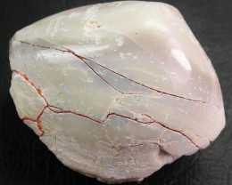 128.50 CTS POLISHED SHELL FOSSIL FROM COOBER PEDY-   [CP802]