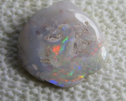 opalized shell.