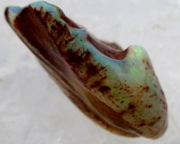 OPALIZED FOSSIL SHELL C/P48  CARATS JO 2085