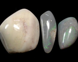 40CTS PARCEL 3  POLISHED OPALIZED FOSSIL SHELL C/P PL 363