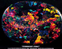 "A4 SIZE POSTER ""FORREST FIRE"""