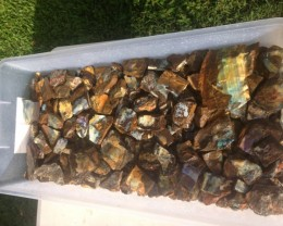 Boulder Rough Opportunity For Opal Cutters