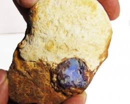 43 grams  Boulder Opal  rough specimen   PL 1056