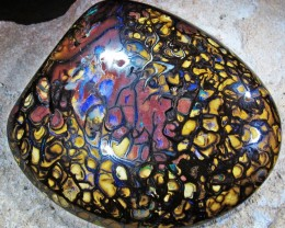 706  Cts  Yowan nut   Opal  split polished  QOM 1415