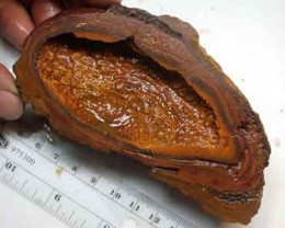 YOWAH NUT SPECIMEN    R802