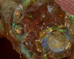 9.5ct Rough Ethiopian Wello Opal Specimen / 5/5 Colours