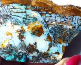 306.70  CTS BOULDER OPAL FOSSIL WOOD   GC