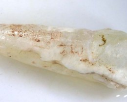4.35 CTS FOSSIL BELEMNITE  FO-369