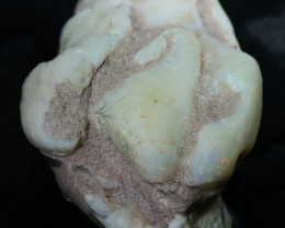 125.65 CTS NATURAL SHELL FOSSIL  [CP355]