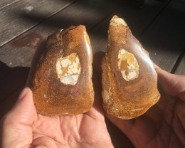 150 0Cts   POLISHED YOWAH NUT  Opal Specimen  BU 2171