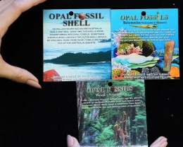 30  Retail display cards for Fossil Opals