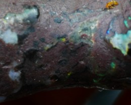 Indonesian Wood Fossil Opal Rough 28.50 Crt