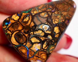 71.35CT VIEW KOROIT BOULDER OPAL GM538