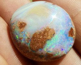 28.5ct Boulder Opal Wood Fossil