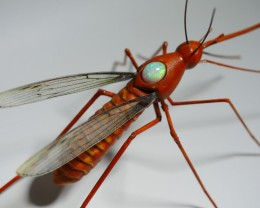 CARVING MOSQUITO FROM INDONESIAN TEAK WOOD WITH BEAUTY WELO OPAL