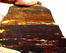 193.50CTS-BOULDER OPAL RARE PALM WOOD FOSSIL SPECIMEN FO-807