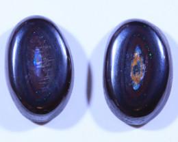 12.60ct -Blue Jays--Koroit Boulder Opal [20789]