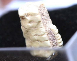 1.10CTS CRINOID FOSSIL COOBERPEDY FO -832