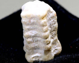 2.80CTS CRINOID FOSSIL COOBERPEDY FO -834