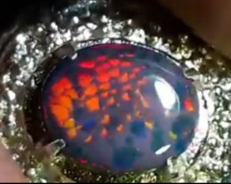 Cek video Rare item HONEYCOMB PATTERN Opal