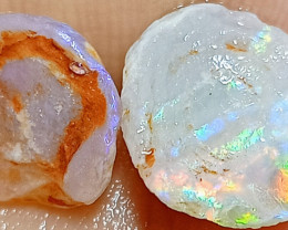 4.5 Cts Opalized Yabby Buttons (gastroliths) With Color YB295