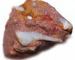 29.45 CTS DENTALIUM  SPECIMEN IN HOST ROCK-ELEPHANT TUSKS [S-FOSSIL123]