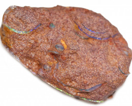 103.10 CTS DENTALIUM  SPECIMEN IN HOST ROCK-ELEPHANT TUSKS [S-FOSSIL155]