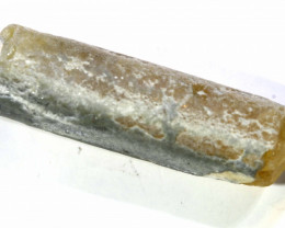 12.25 CTS FOSSIL BELEMNITE  FO-173