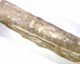 19.80 CTS FOSSIL BELEMNITE  FO-174
