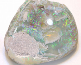 80.95 CTS   OPALISED FOSSIL CLAM SHELL   FO-892