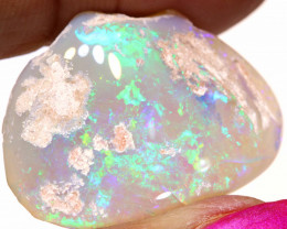 26.95 CTS   OPALISED FOSSIL CLAM  SHELL   FO-901
