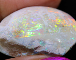 53.05 CTS   OPALISED FOSSIL CLAM SHELL   FO-905
