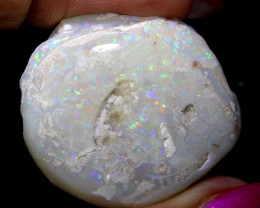 59.95 CTS   OPALISED FOSSIL CLAM  SHELL   FO-907