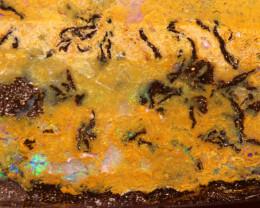 Australian Boulder Opal Specimen DO-24