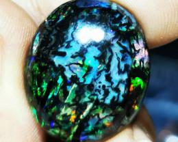 Amazing Stunning Wood Indonesian Opal
