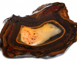 123.55 CTS YOWAH OPAL NUTS BUTTERSCOTCH CENTER   [BY9681]