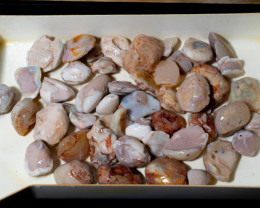 2600 carats Coober Pedy 22 Mile mine Fossil Shells Opal