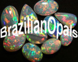 brazilianopals