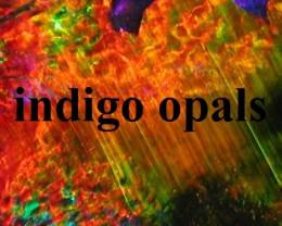 indigoopals